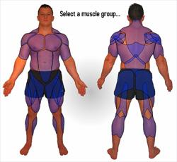 Sv: Knebøy - Hvilken muskler er innvolvert?